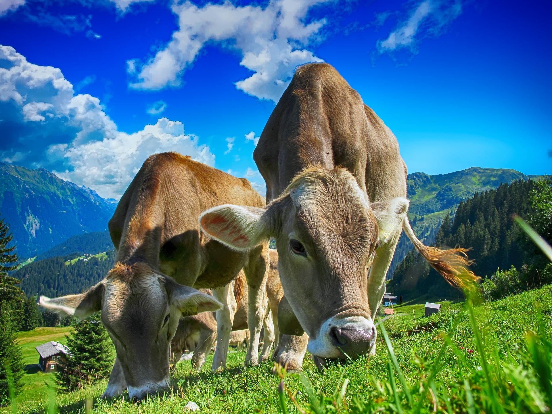 los beneficios del biogás 05