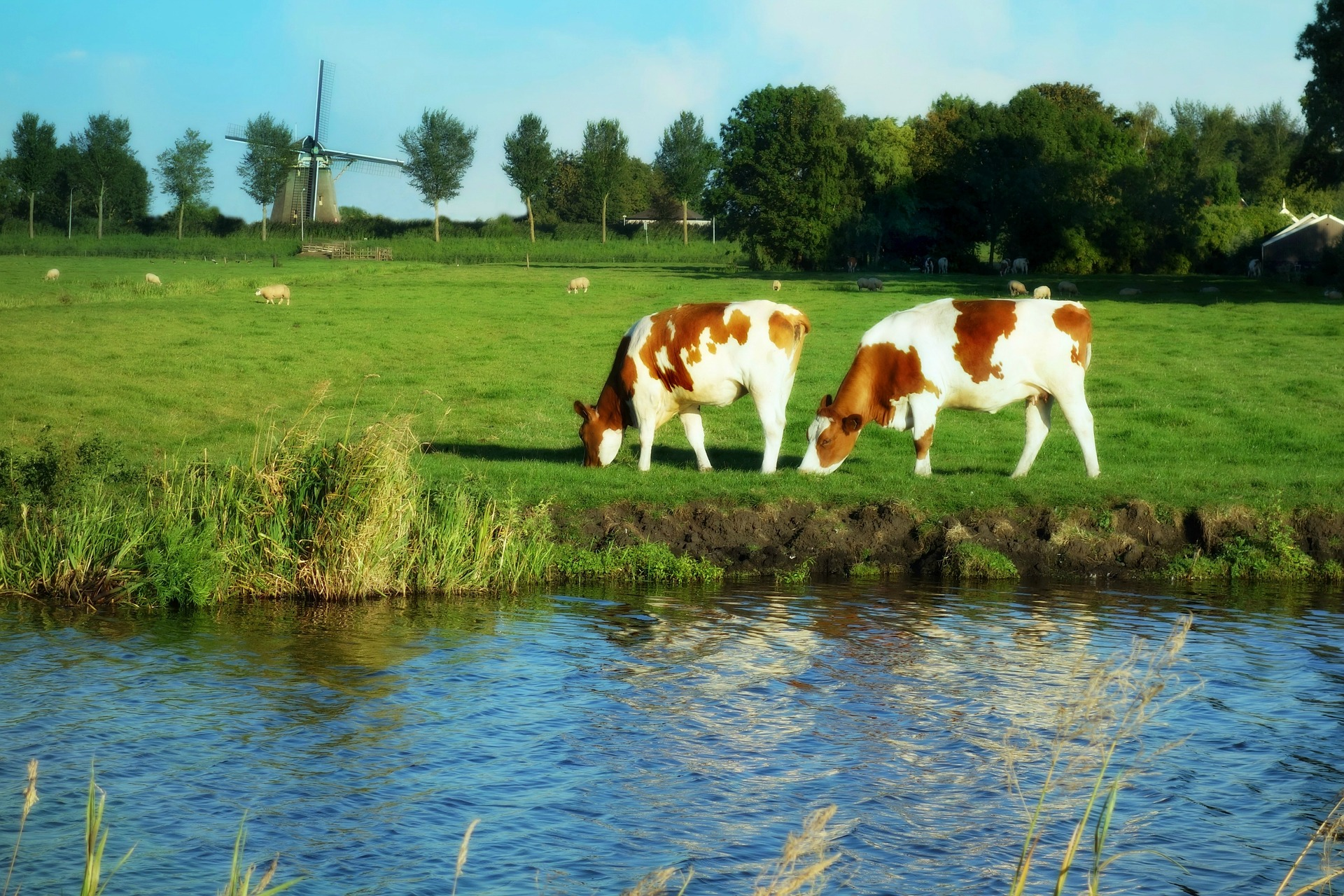 Biogas plant Biddinghuizen Netherlands Planta de Biogás Biddinghuizen 05